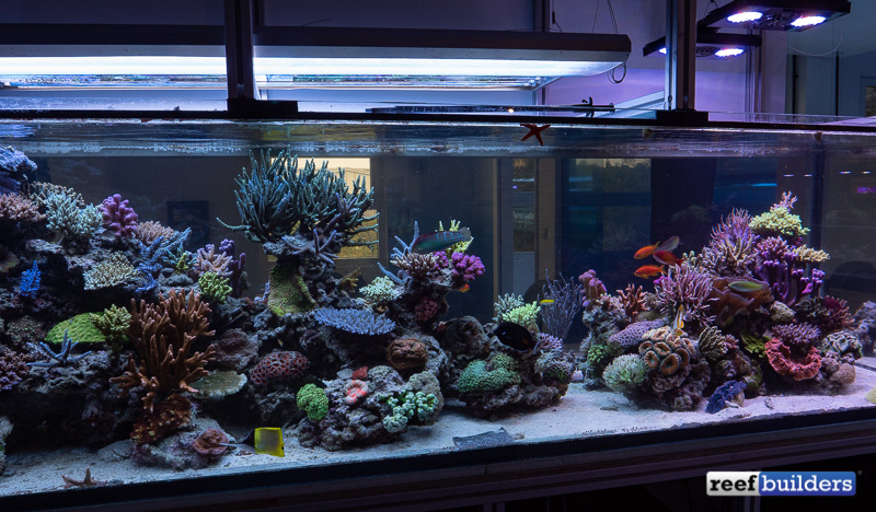 t5-led-comparison-white-corals-display-7