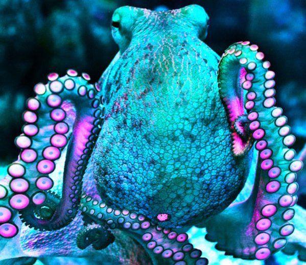 octopus-ecstasy-mdma.jpg