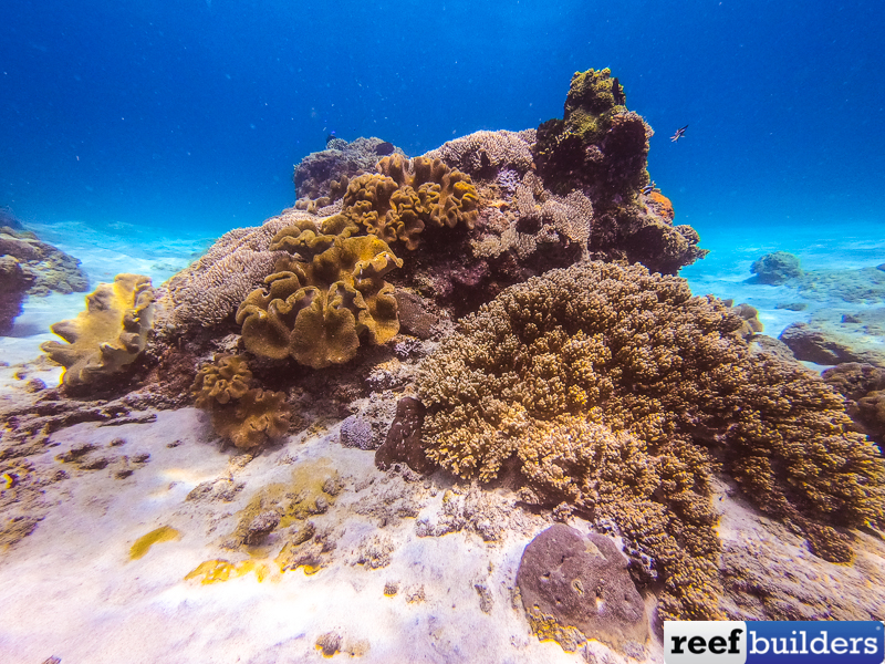Soft-coral-2.jpg