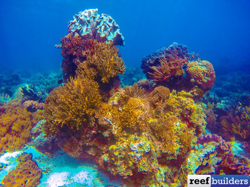 Soft-coral-reef-5.jpg