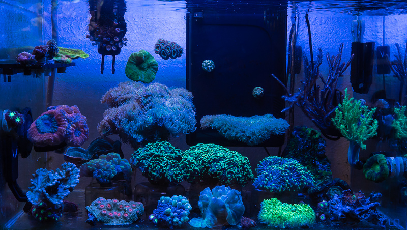 coral-aquarium-jake-adams-3.jpg
