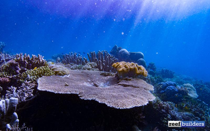 raja-ampat-coral-reef-1.jpg