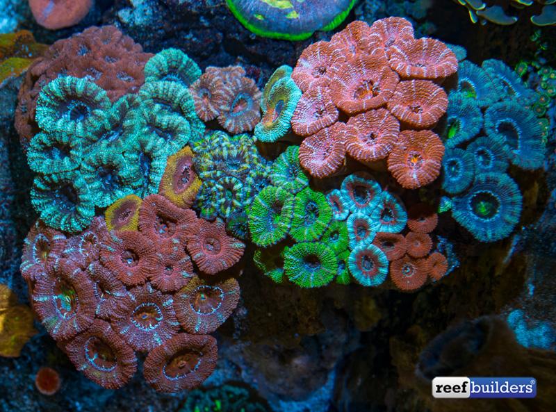 lps-coral-paradise-14.jpg