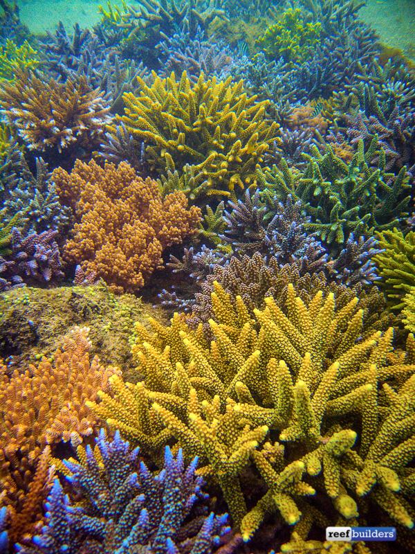 coral-farm-reef-bali-14-1.jpg