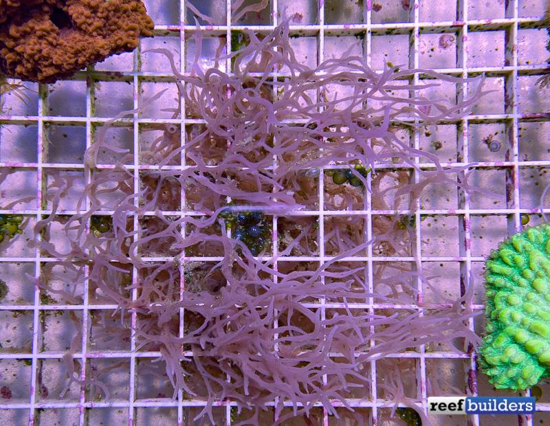 sponge-coral-reef-1.jpg