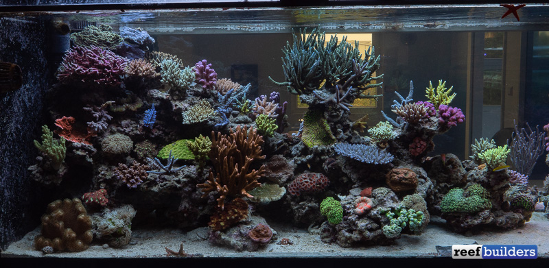 t5-led-comparison-white-corals-display-6