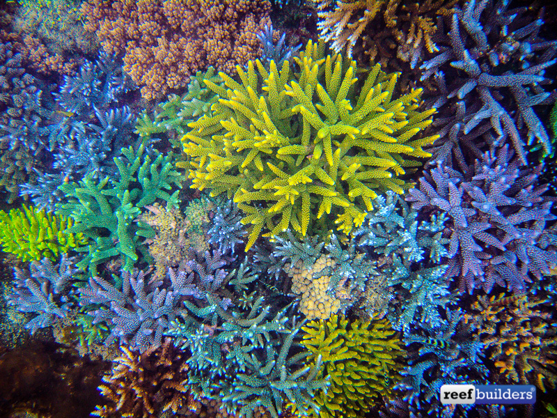 coral-farm-reef-bali-13-1.jpg