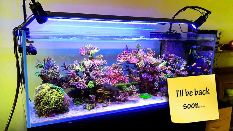 aquarium-cruise-control.jpg