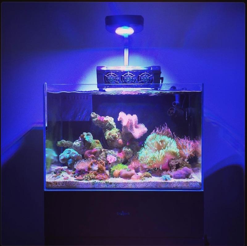 artero-aquarismo-multi-stand.jpg