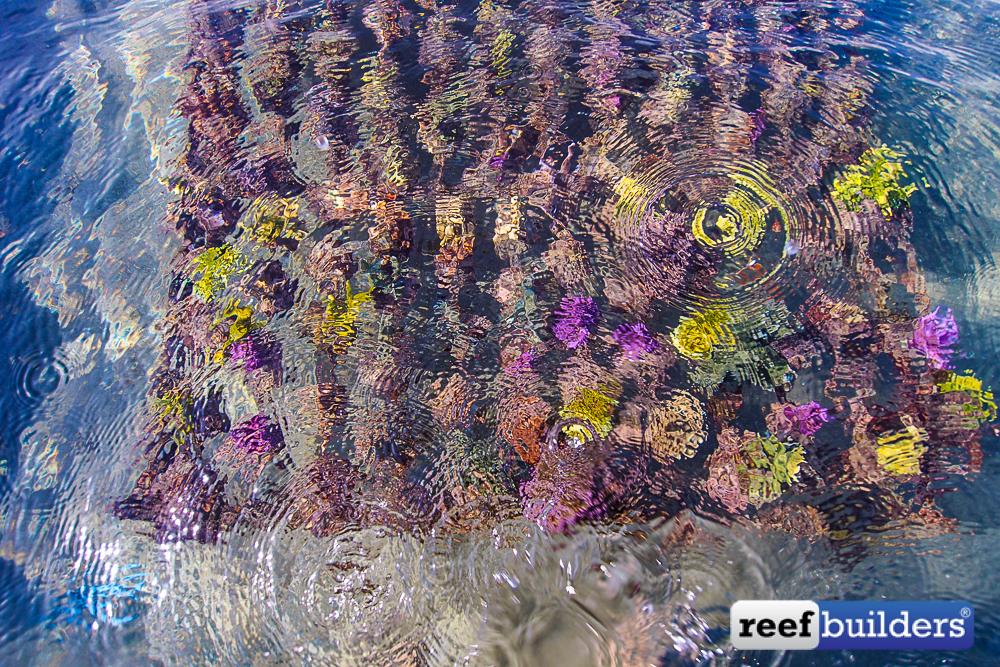 Bali-Coral-Farm-3.jpg