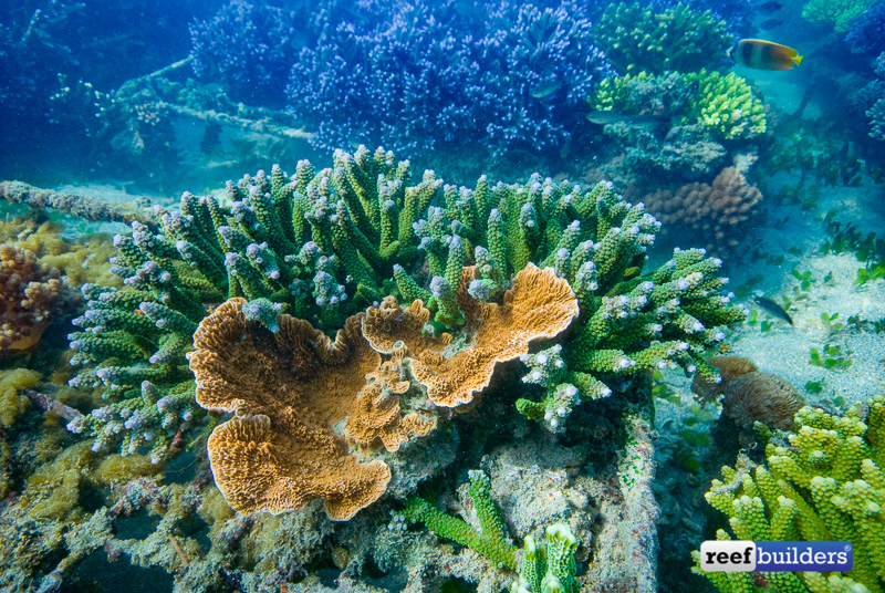 coral-farm-reef-bali-12-1.jpg