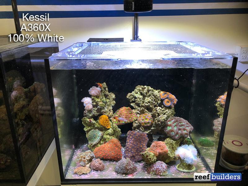 kessil-a360x-white-2.jpg