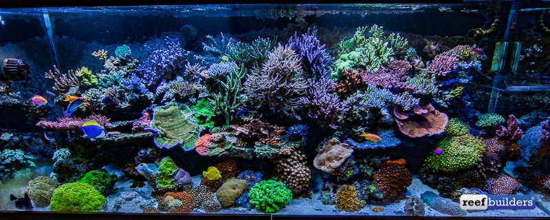 aquatic-art-inc-reef-tank-1.jpg
