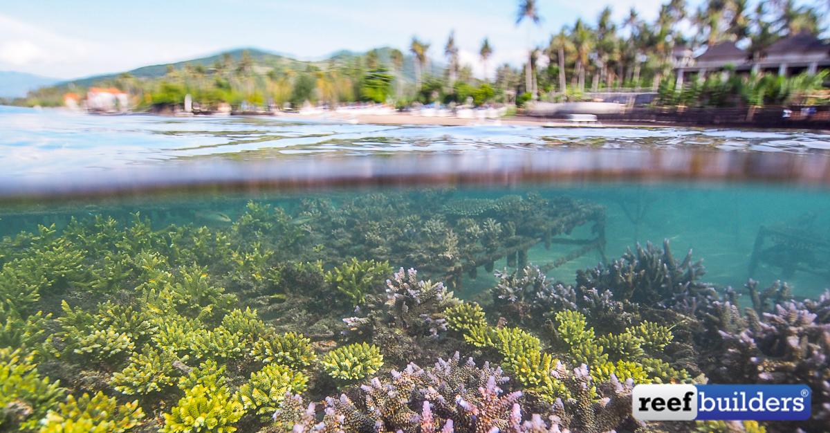 Bali-Coral-Farm-1.jpg