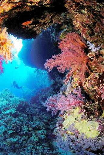 20140321085010-Dendro_reef.jpg