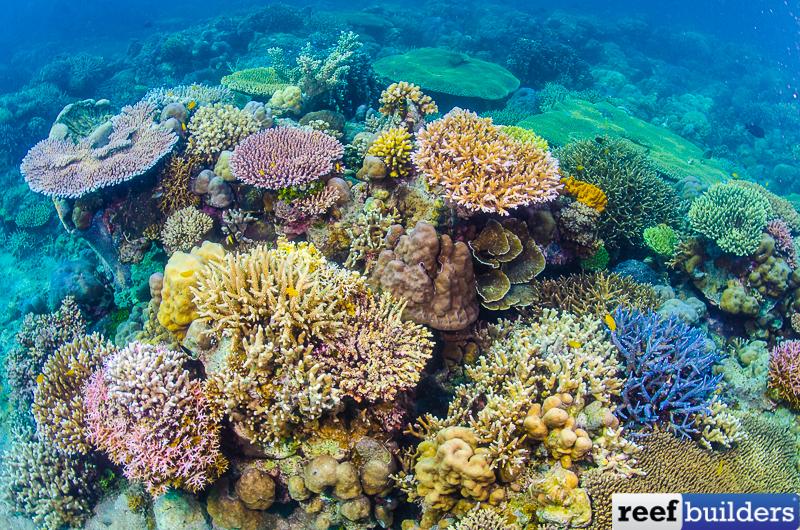 Reef-Scene-65.jpg