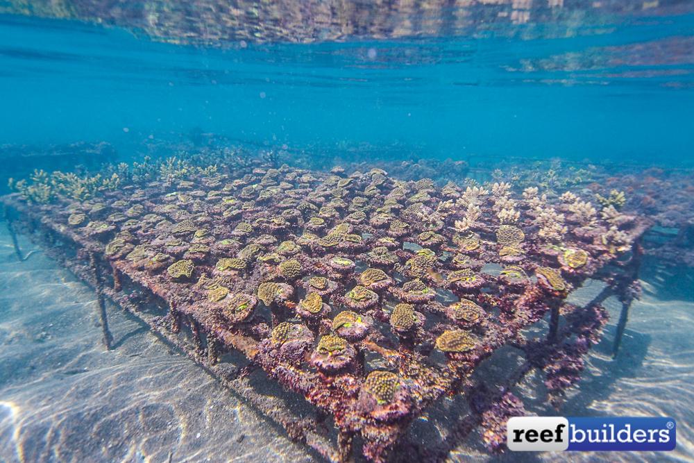 Bali-Coral-Farm-2.jpg