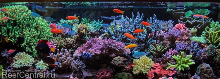 all-in-one-biopellet-reef-tank.jpg