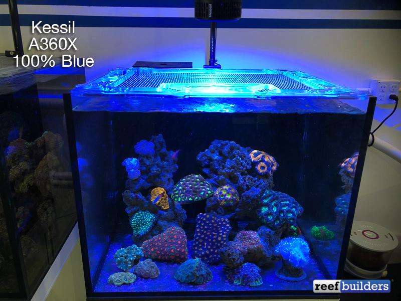 kessil-a360x-blue-1.jpg